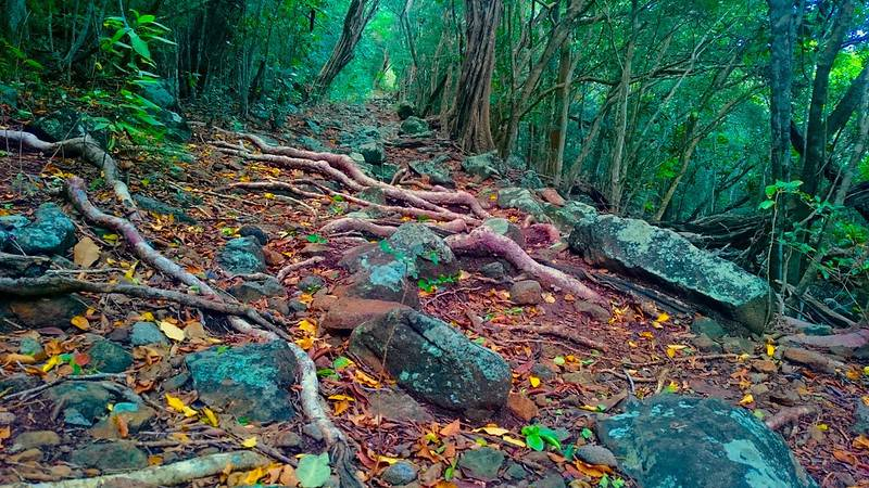 Cabrits National Park - Best Things to Do and See in Dominica