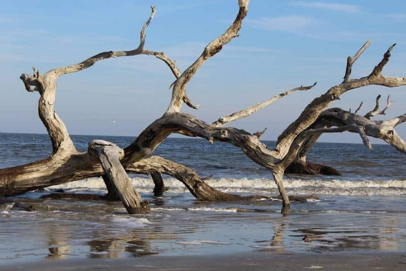 Driftwood Beach, Georgia