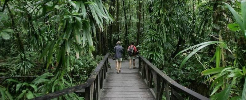 Jungle Bay, Dominica