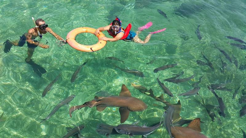 Swimming with the sharks in Belize
