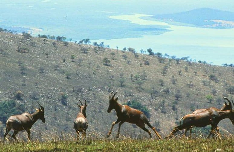 Akagera National Park - Rwanda with Kids