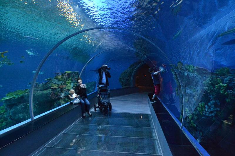 Blue Planet Aquarium - Best Things to Do in Copenhagen with Kids