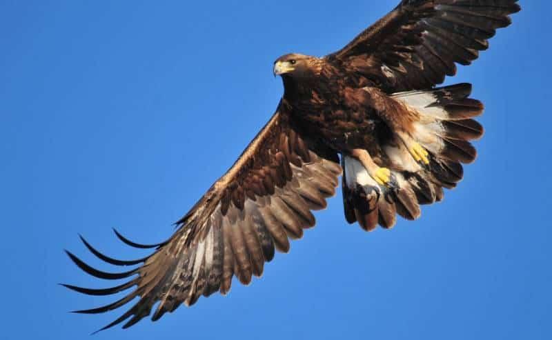 Golden Eagle, Hallam Lake-Aspen Center - Free Things You Must Do in Aspen, Colorado