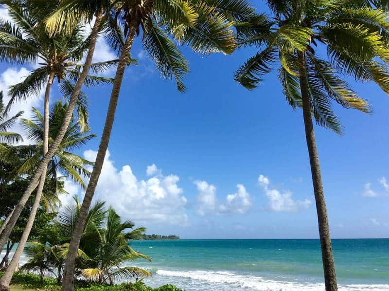 Best Things You Should Do in Martinique