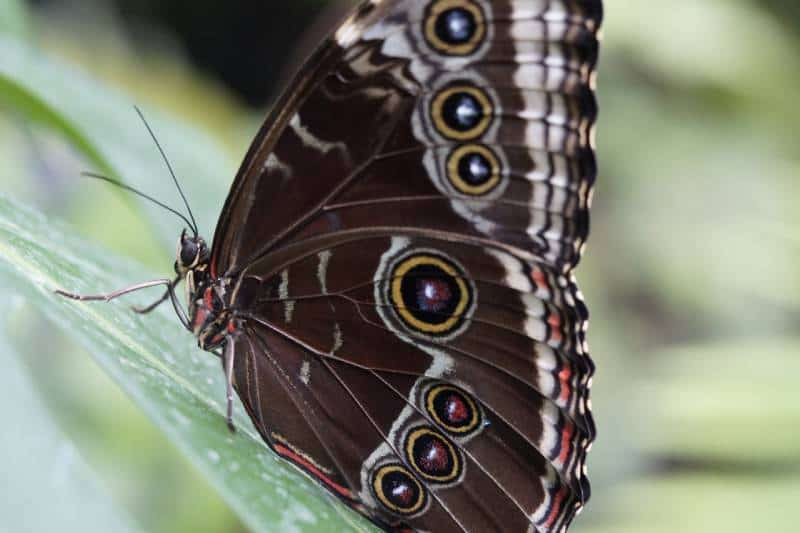 Butterfly Farm - Things You Must Do and See in Saint Martin