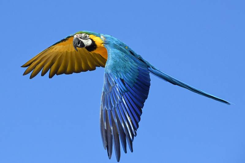Parrot, Zoo - Best Things to Do and See in Sint Maarten