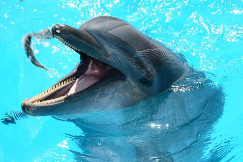 Dolphins Play - Oman Family Vacation