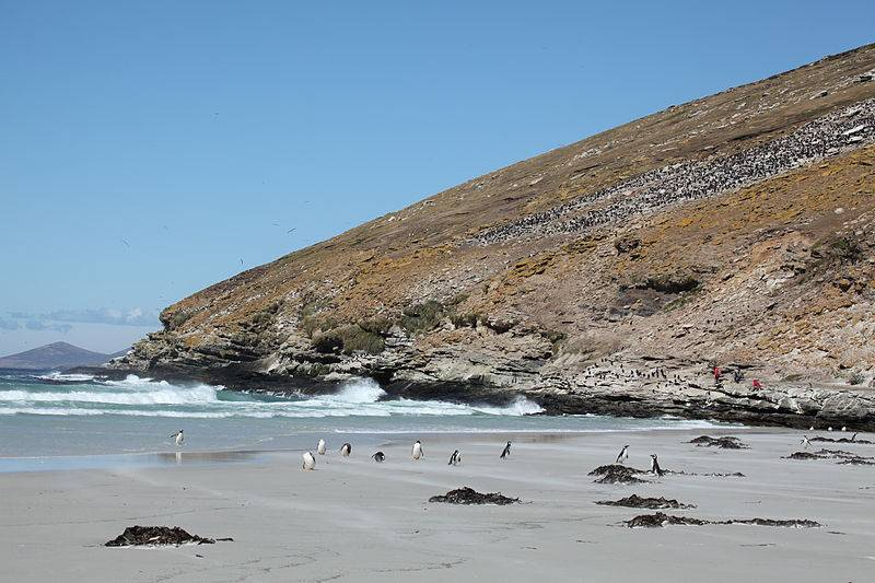 Saunders Island - Falkland Islands with Kids