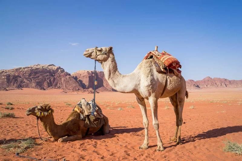 camel back riding in Wadi Rum