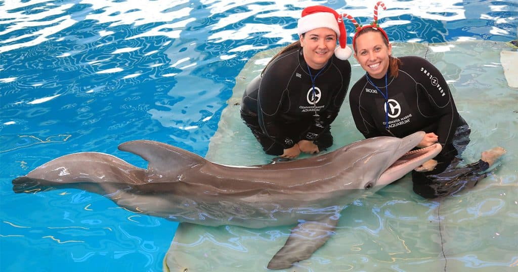 Clearwater Marine Aquarium - Swim with Dolphins