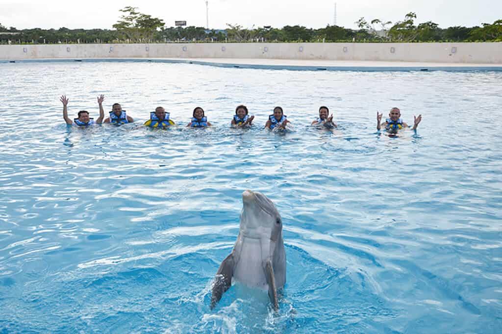 Dolphin Discovery, Punta Cana