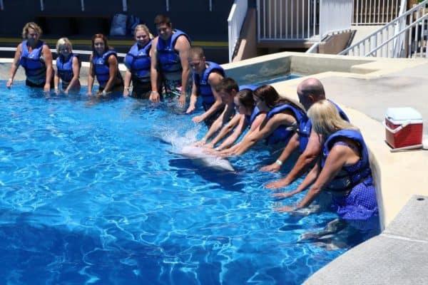 Gulf World Marine Park - Swim with Dolphins