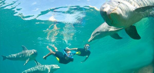 dolphin cay nassau bahamas
