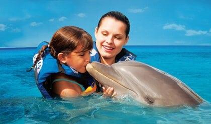 dolphin discovery playa del carmen mexico