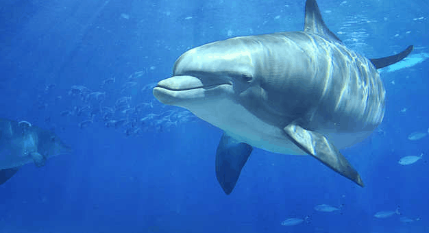 dolphins world cozumel mexico