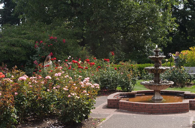 International Rose Test Garden - Places to Visit in Portland