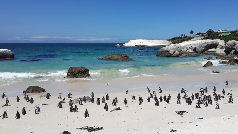 Swimming with Penguins in Boulders Beach