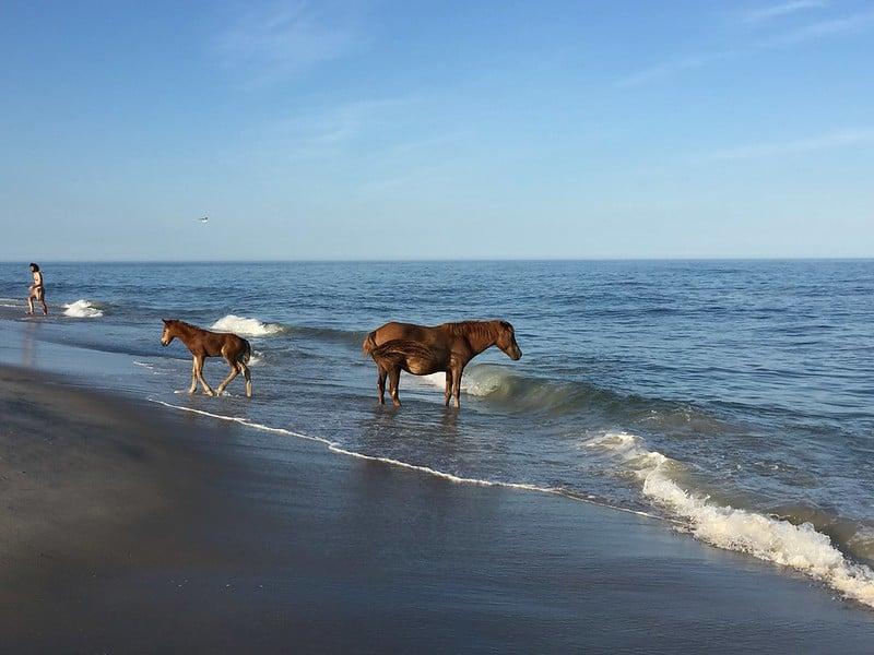 Assateague Island National Seashore Beach in Maryland