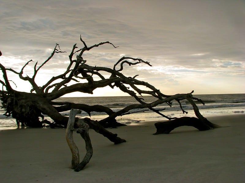Jekyll Island's Driftwood Beach
