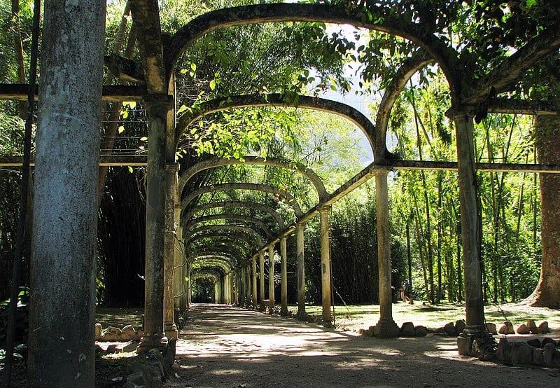 Jardim Botanico- Visiting Rio De Janeiro, Brazil