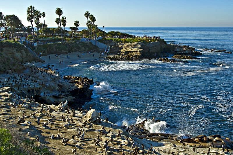 La Jolla Cove Beach- Best San Diego Beaches