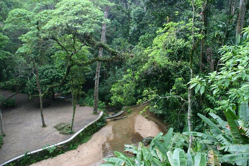 Tijuca National Park - Visiting Rio De Janeiro, Brazil