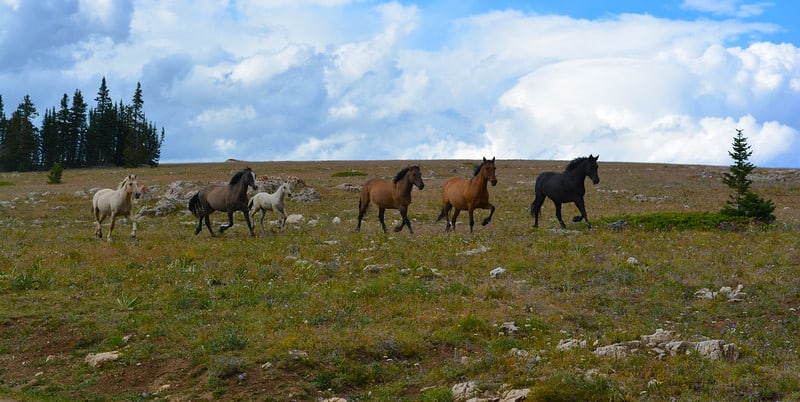 Pryor Mountains- Free Things to do in Billings, Montana