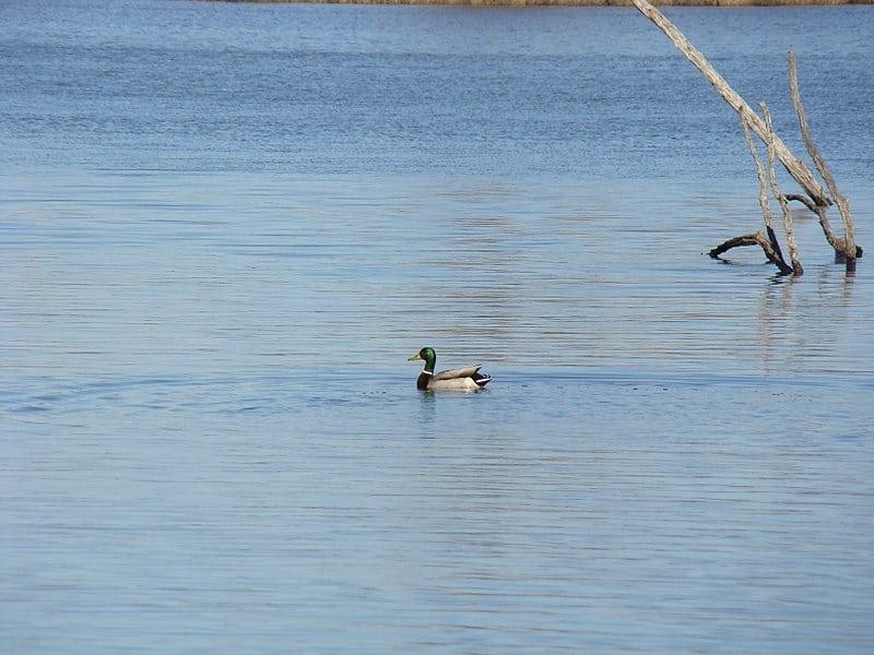 Go Birdwatching at Pickerington Ponds Metro Park