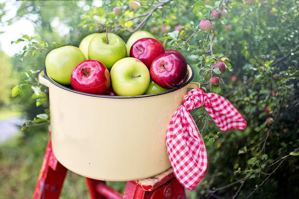 Apple Picking - Best Things to Do with Kids Near Me