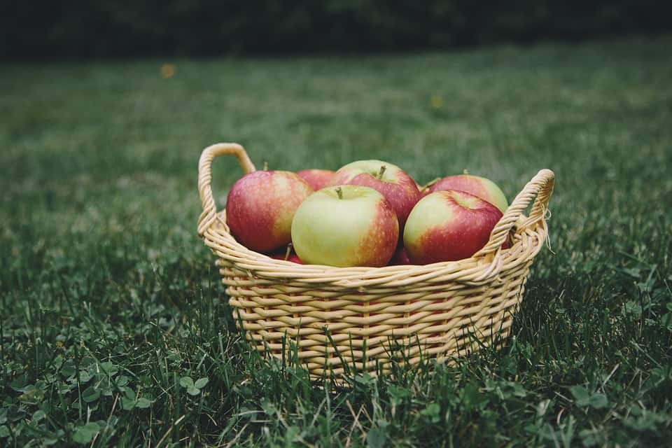 Apple Picking - Safe and Fun Fall Activities and Things to Do This Fall