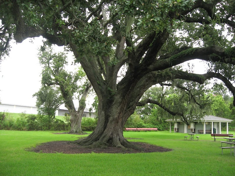 Chalmette Battlefield - Free Things to Do in New Orleans, Louisiana