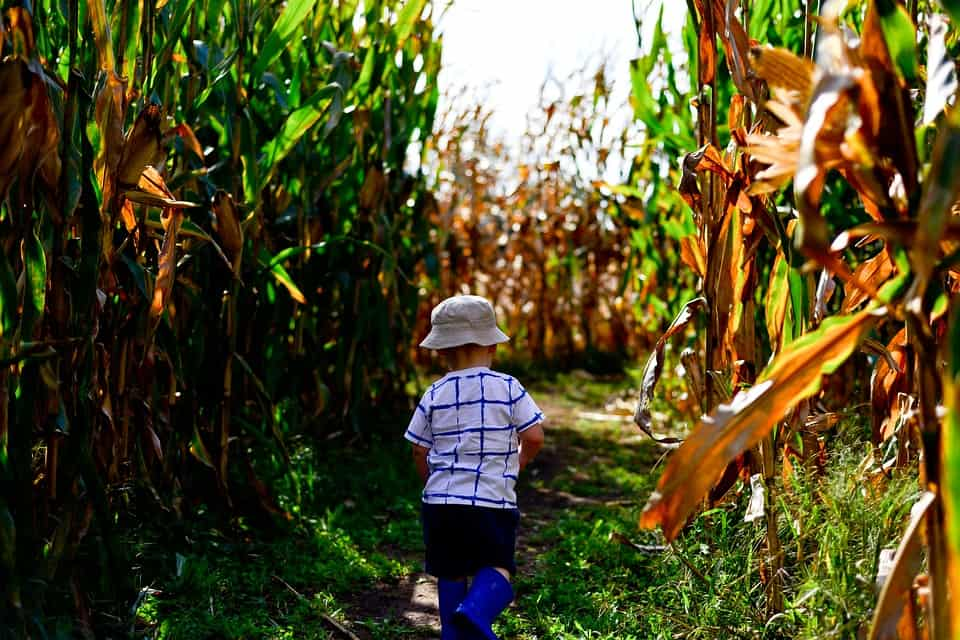 Corn Maze - Safe and Fun Fall Activities and Things to Do This Fall