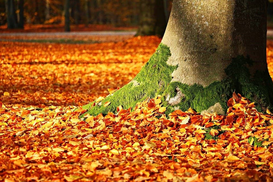 Leaves - Safe and Fun Fall Activities and Things to Do This Fall