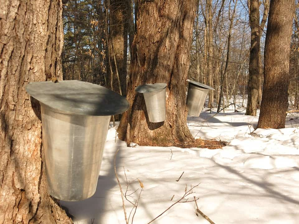 Maple Syrup - Best Things to Do with Kids Near Me