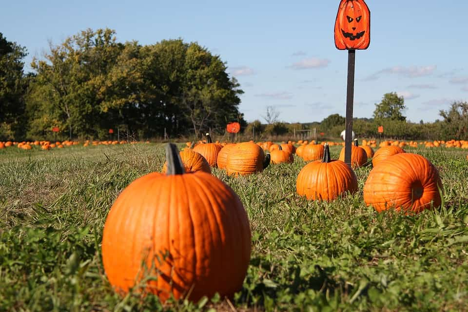 Pumpkin Patch - Safe and Fun Fall Activities and Things to Do This Fall
