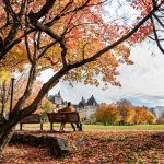 20 Safe and Fun Fall Activities and Things to Do This Fall