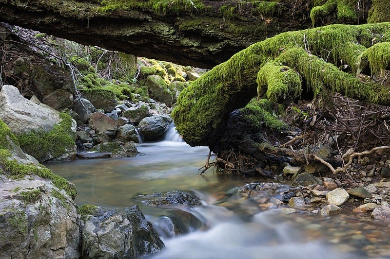 Tamalpais State Park - Best Day Trips from San Francisco