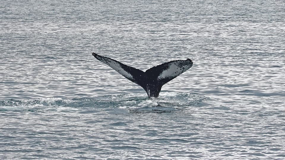 Whale Watching- Best Things to Do in Vancouver (BC, Canada)