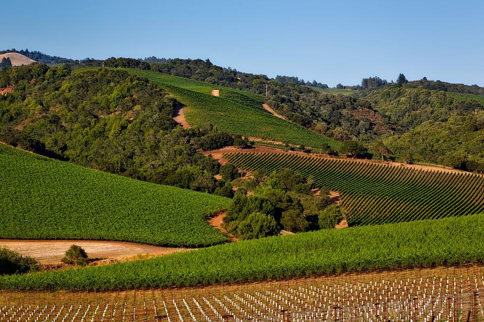 Napa Valley - Best Day Trips from San Francisco