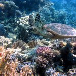 12 Best Places in the World to Swim and Snorkel with Sea Turtles