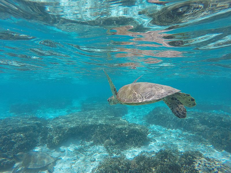 Great Barrier Reef, Australia, Swim and Snorkel with Sea Turtles