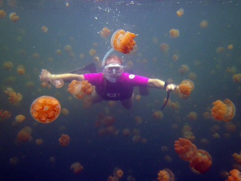 Jellyfish-Lake-Palau