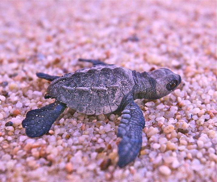 La Paz, Mexico, Swim and Snorkel with Sea Turtles