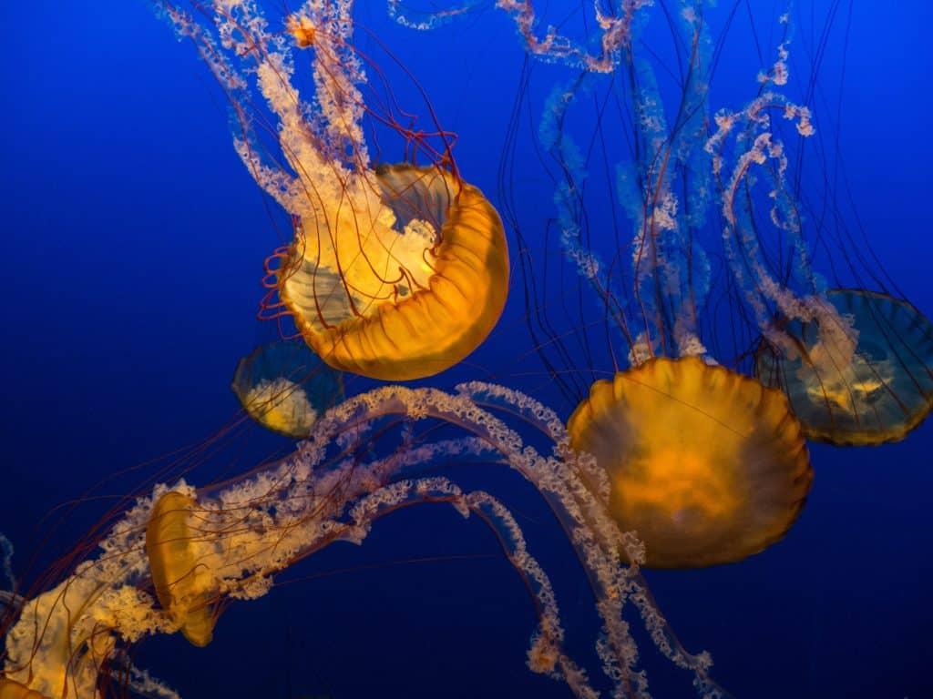 Swim-with-jellyfish