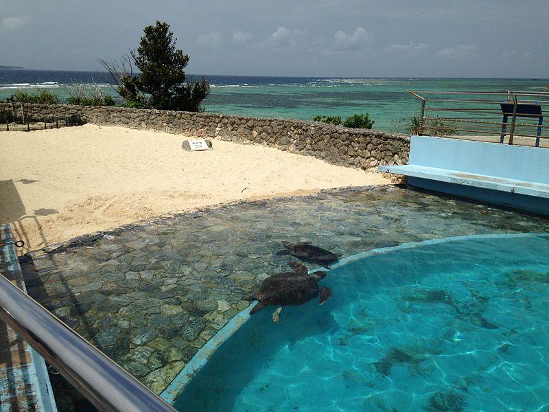 Zamami Island, Japan, Swim and Snorkel with Sea Turtles
